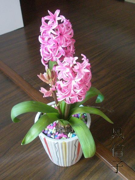 花卉租摆,杭州是花草植物租赁有限公司;花木出租;杭州双华花木植物